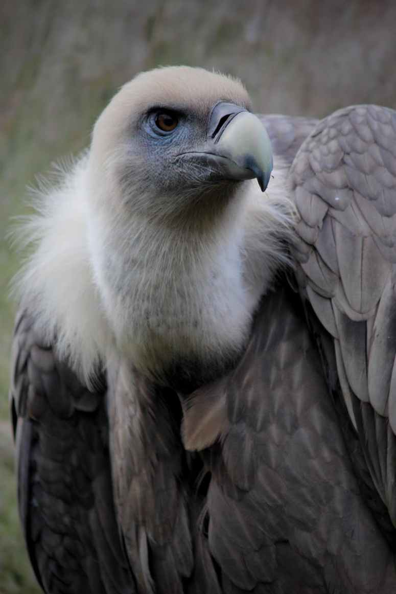 animal avian beak bird